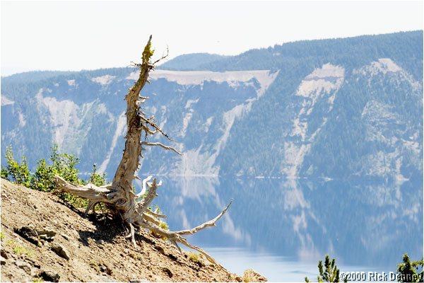 IMAGE: http://www.rickdenney.com/images/cedar-stump-crater-lake-lor.jpg